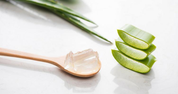 Aloe Vera Pflanze mit Aloe Vera Gel