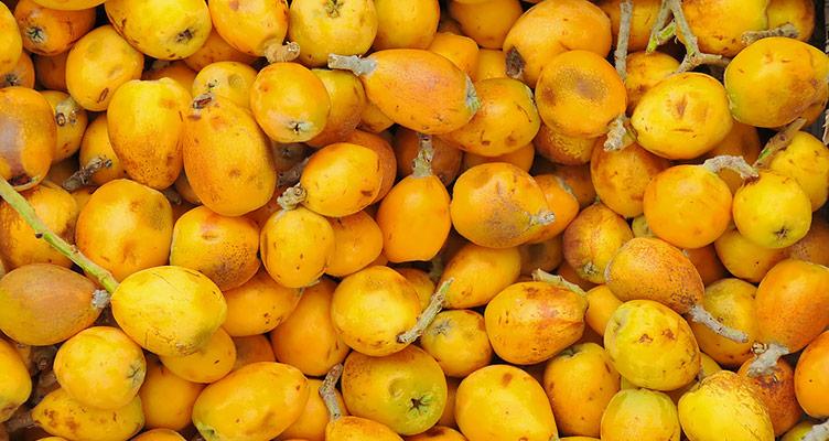 Gelbe Marula Früchte des Elefantenbaumes