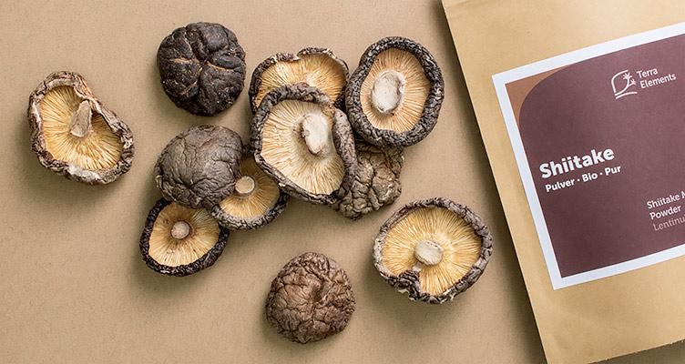Shiitake Pilz und Shiitake Pulver