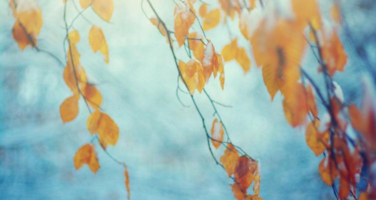 Winterlandschaft mit Blättern